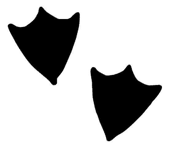 2 Duck Feet Silhouette By Primax Pty Ltd 1029523