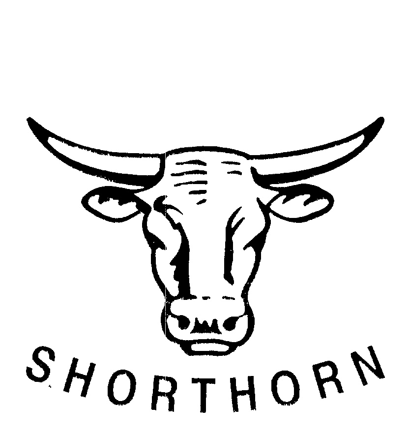 shorthorn by glen angus templeman 720856