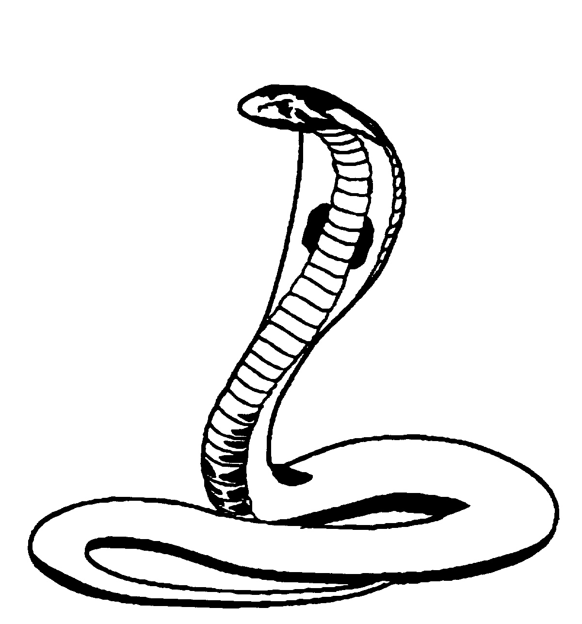 realistic cobra coloring pages - photo#34